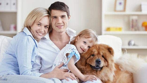 Wills & Trusts dog-young-family Direct Wills Bloomsbury